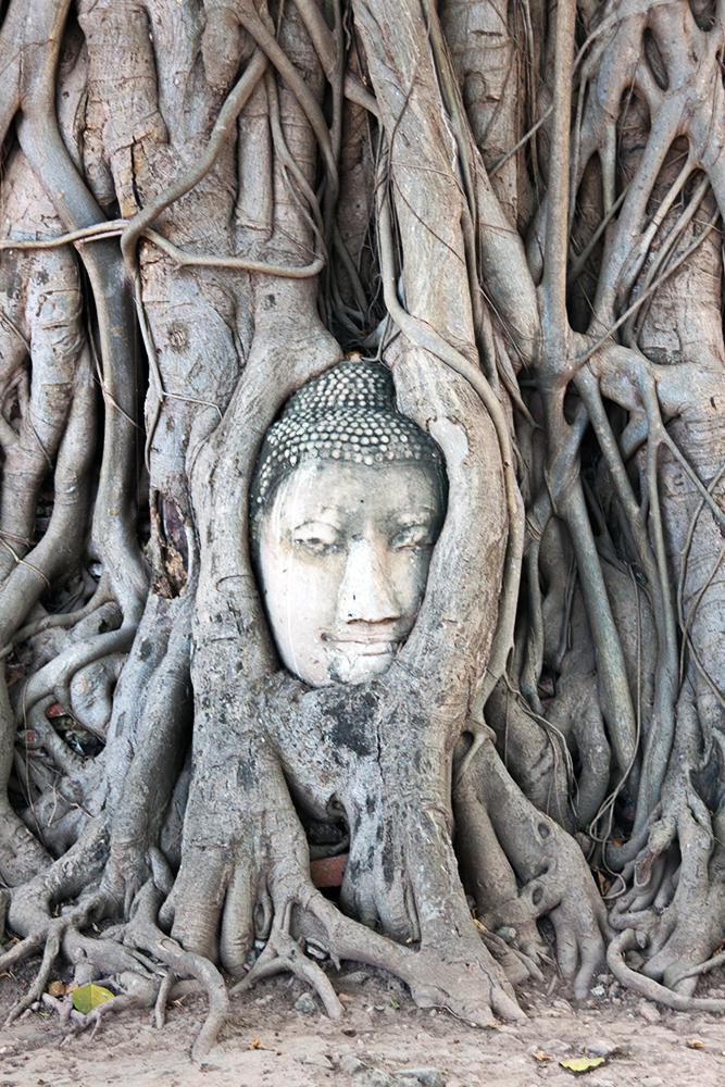 Estatua de cabeza de Buda en Ayutthaya