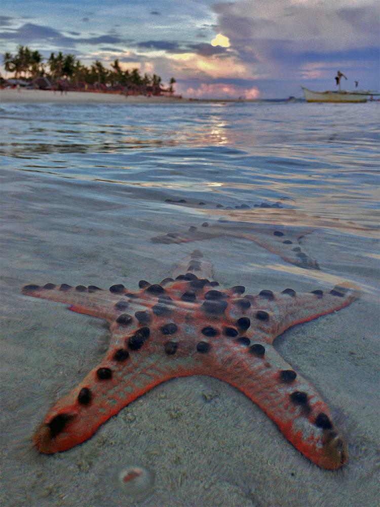 Estrellas de mar en Bantayan, Filipinas