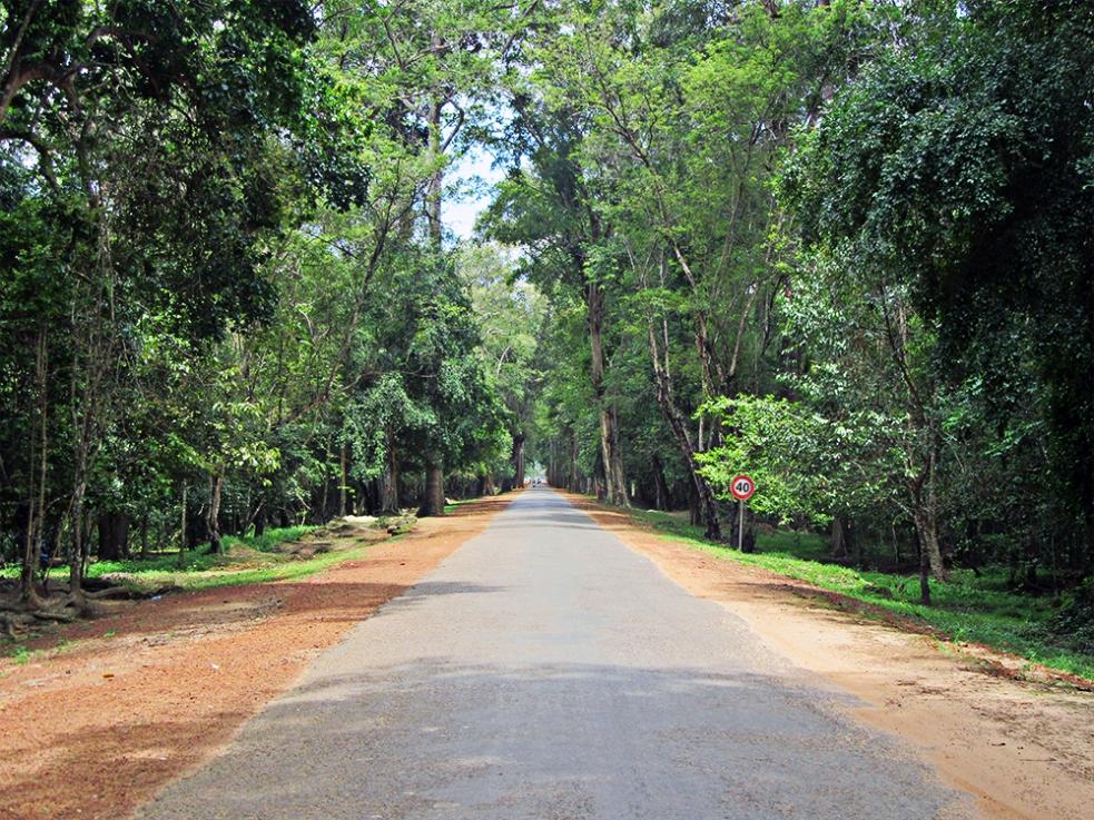 Camino a Angkor