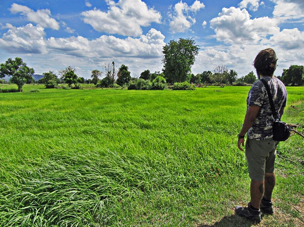 Arrozales en Battambang, Camboya