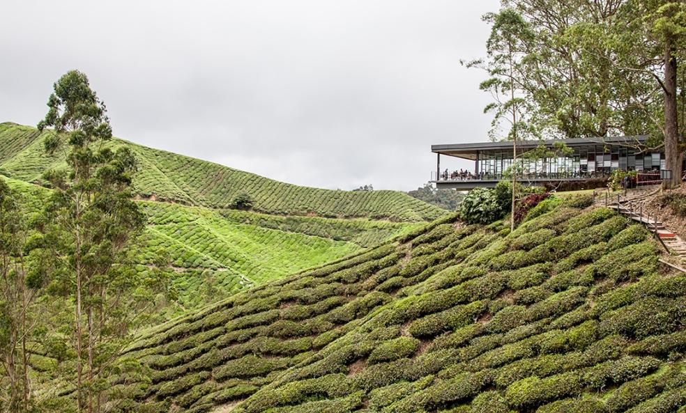 Intalaciones de BOH Tea plantation