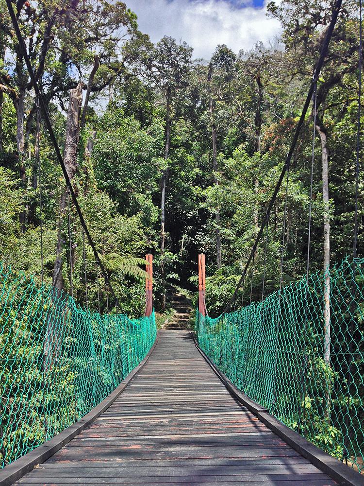 Puentes colgantes en Cameron Highlands