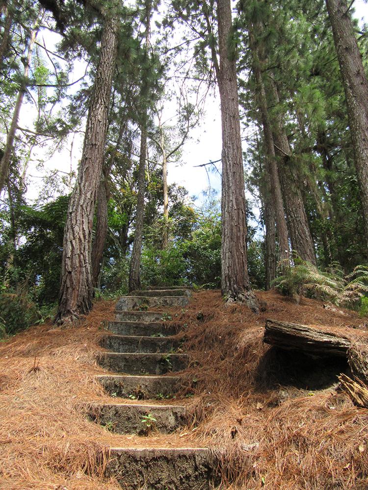 trails por la selva malaya